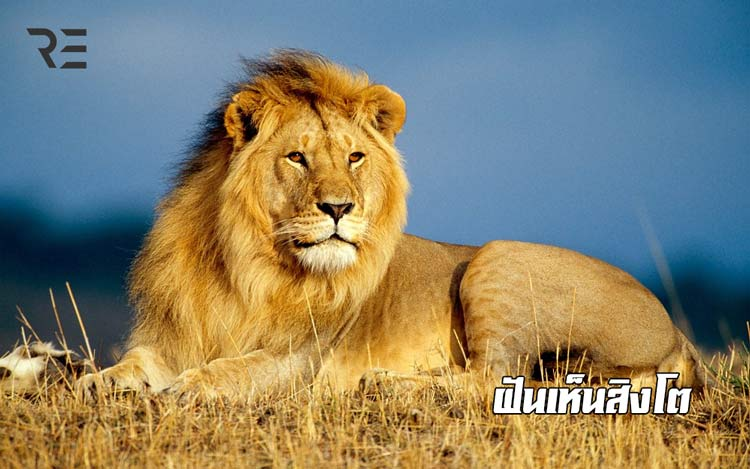 ฝันเห็นสิงโต