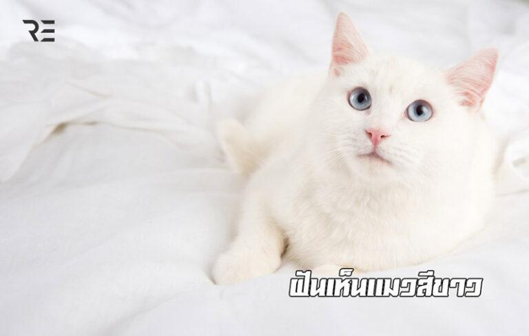ฝันเห็นแมวสีขาว