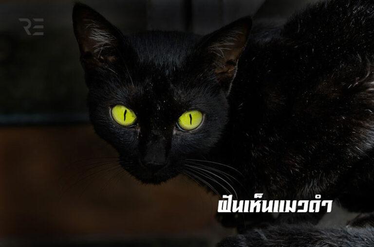 ฝันเห็นแมวดำ
