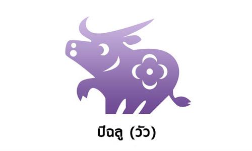 ปีฉลู ( วัว )